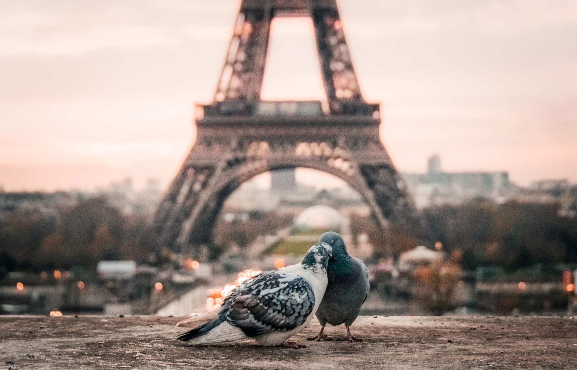 Les meilleures destinations pour une lune de miel en France